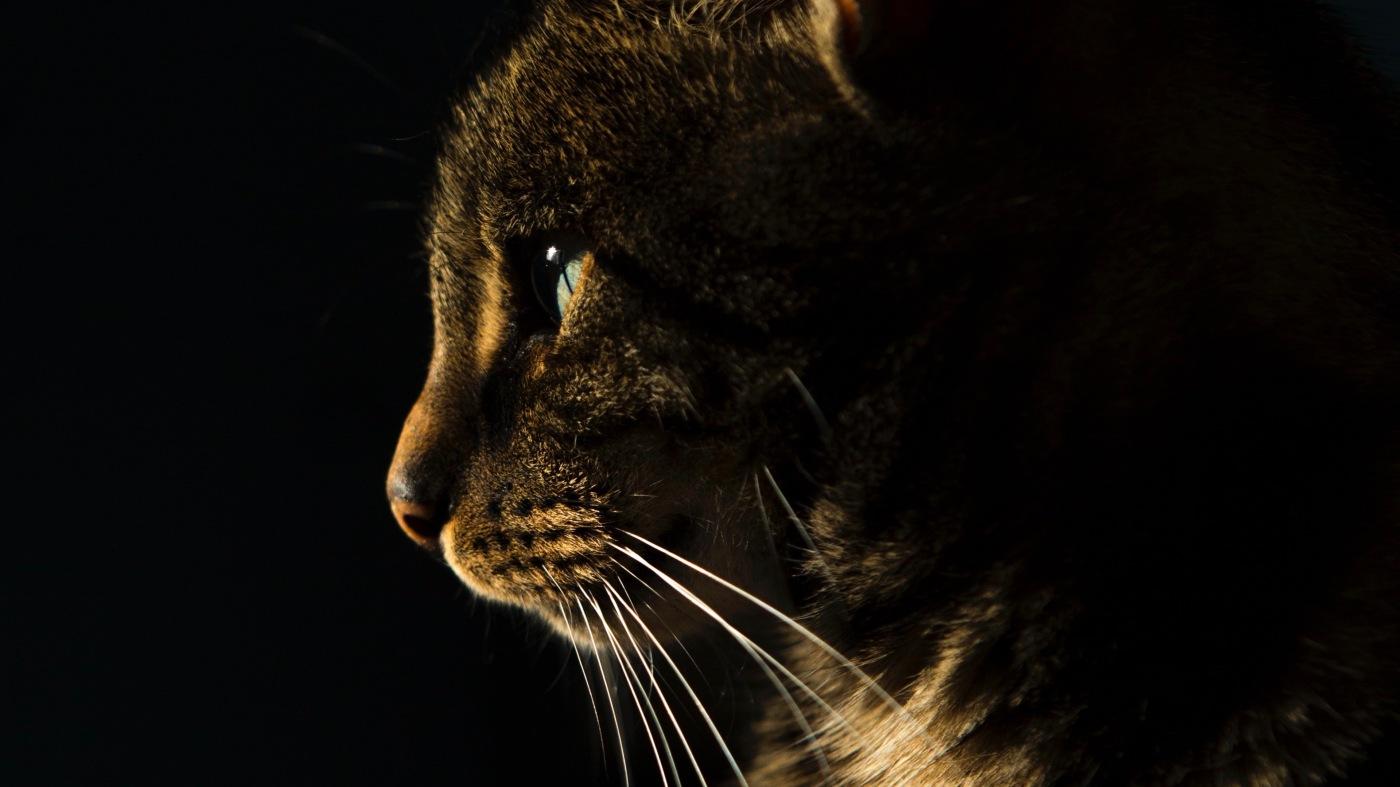 Auf dem Bild sieht man eine Katze in der Sonne.